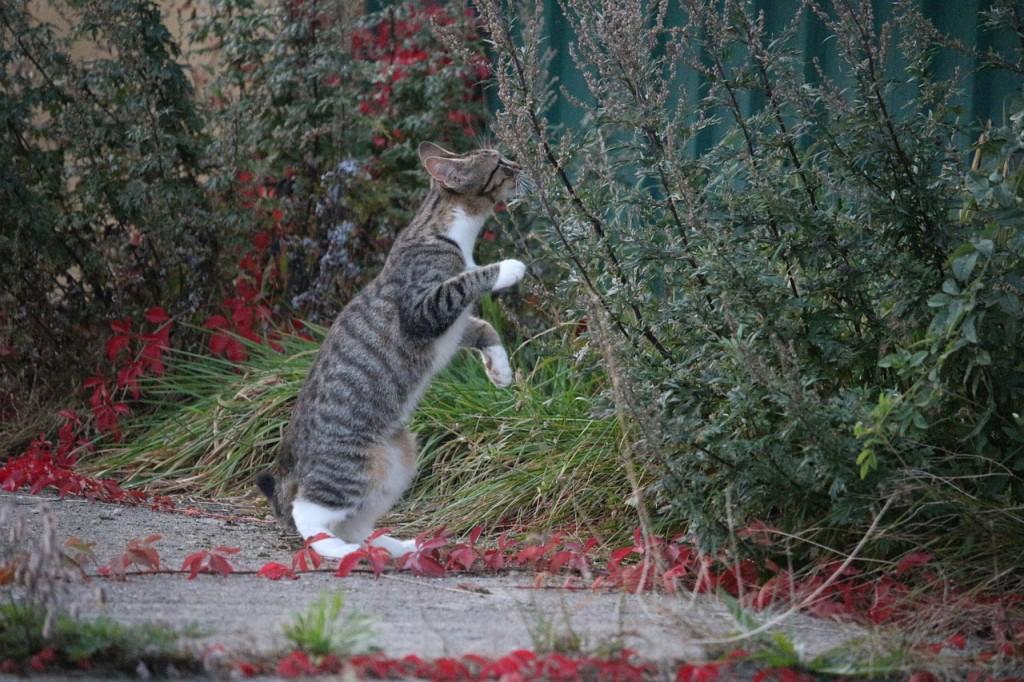 kot w ogrodzie