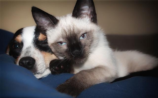 Wspólnie leżący pies i kot