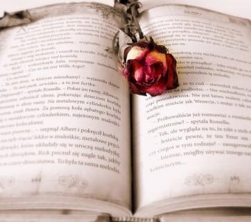 róża leżąca na książce