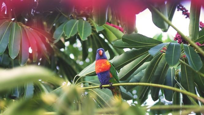 papuga w palmiarni