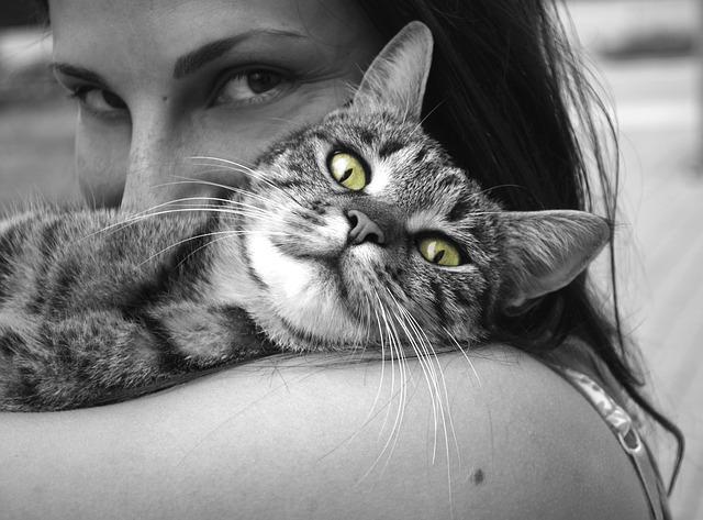 Kot na ramieniu u swojej pani