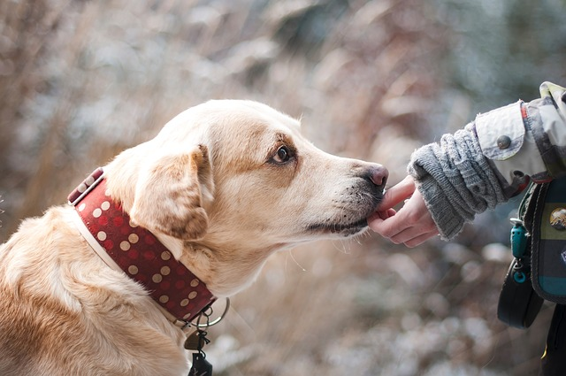 Pies jedzący swoją przekąskę