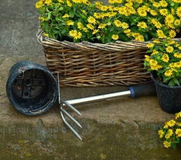 Ogród na wiosnę