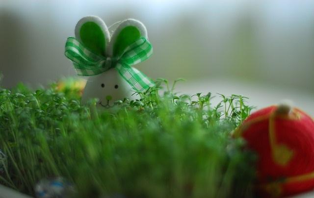 Wielkanocny zajączek w trawie