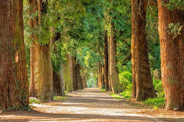 alejka wśród drzew